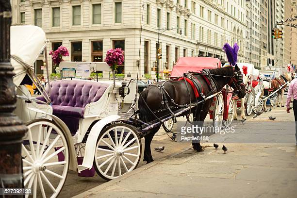 New York City Horse Drawn Carriage