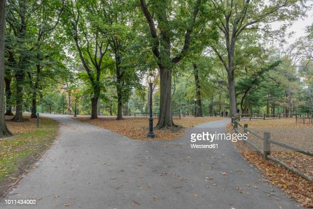 usa, new york city, manhattan, central park - central park stock pictures, royalty-free photos & images