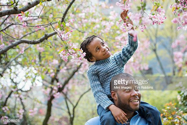 a new york city park in the spring. sunshine and cherry blossom. a father giving his son a ride on his shoulders. - florida us state - fotografias e filmes do acervo