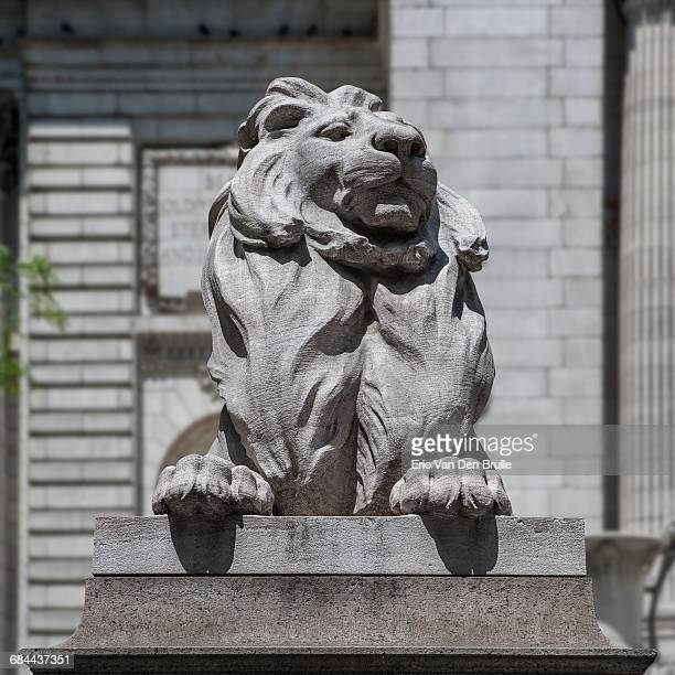 new york city public sculpted library lion front v - eric van den brulle stock pictures, royalty-free photos & images