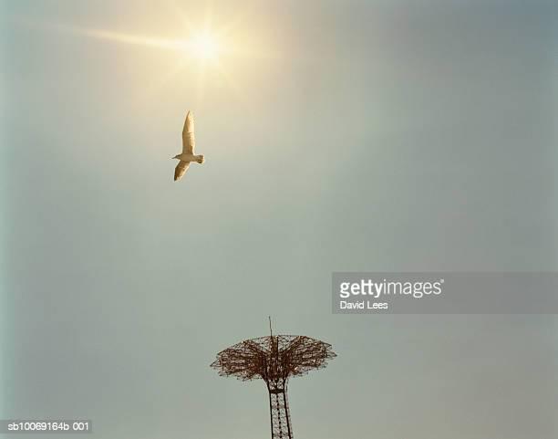 usa, new york, coney island amusement park, bird in flight against sun, low angle view - ブルックリン コニー・アイランド ストックフォトと画像