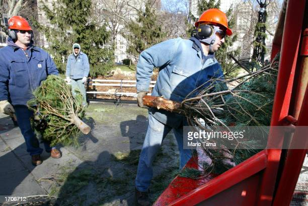 New York Department of Parks and Recreation workers load Christmas trees into a mulch machine after a news conference promoting Christmas tree...
