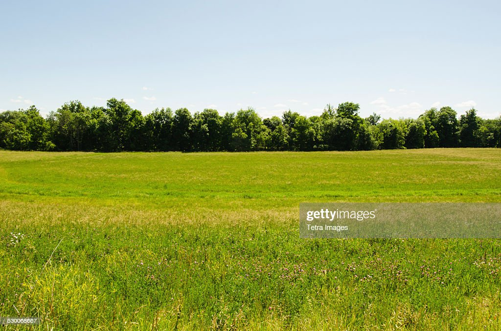USA, New York, Hudson, View of meadow : ストックフォト