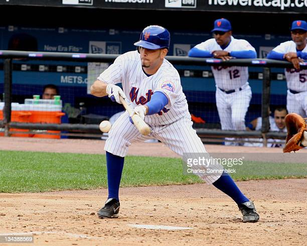 New York Mets pitcher Oliver Perez lays down a sacrifice bunt during the Major League Baseball game against the Arizona Diamonbacks on June 3 2007 at...