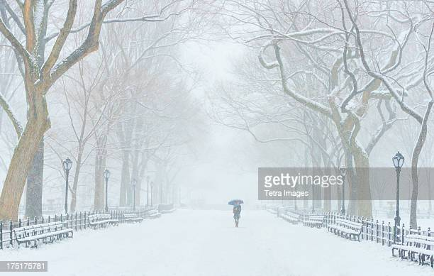 USA, New York, New York City, Central Park, The Mall in winter