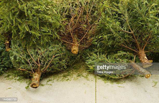 USA, New York, New York City, Close up of cut Christmas trees lying on pavement