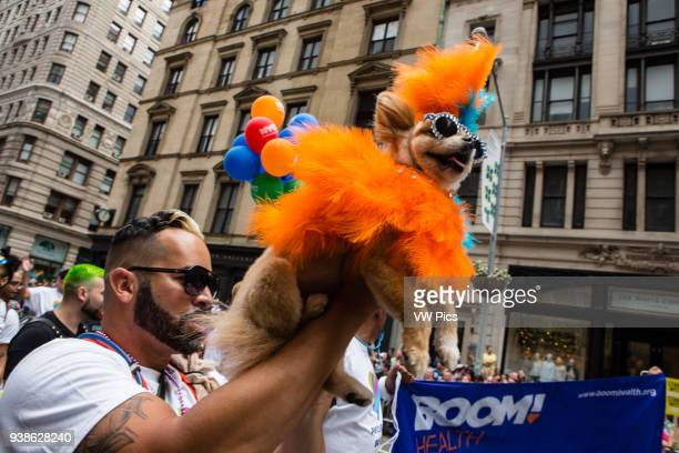 New York NY 25 June 2017 New York City Heritage of Pride March filled Fifth Avenue for hours with groups from the LGBT community and it's supporters...