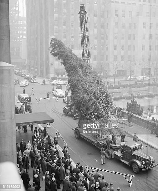 New York, NY- A derrick begins the job of lifting to an upright position Rockefeller Center's traditional Christmas tree. Decorations were hung on...
