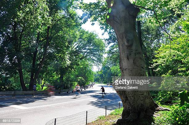 New York, road in Central park