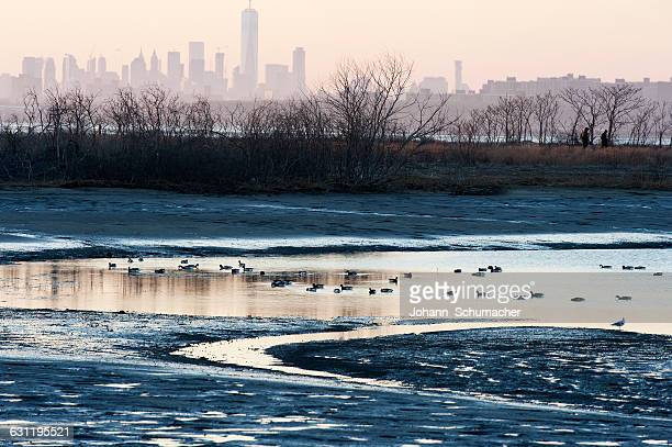 New York skyline with waterfowl in Late winter