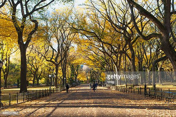 USA, New York State, New York City, Alley in Central Park in autumn