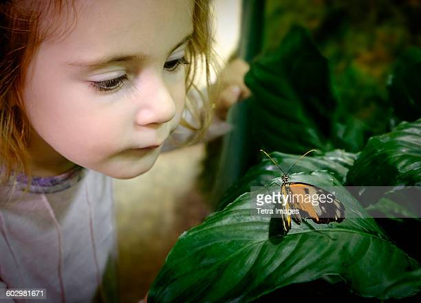 USA, New York State, New York City, Girl (2-3) looking at butterfly on leaf
