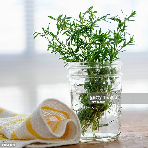 USA, New York State, New York City, Rosemary in jar
