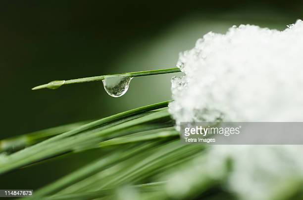 USA, New York State, New York City, snow melting on grass, close-up