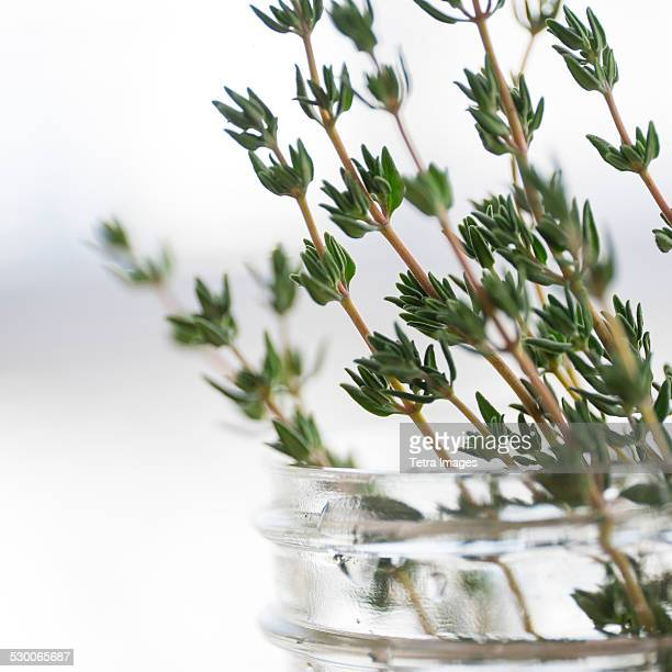 USA, New York State, New York City, Thyme in jar