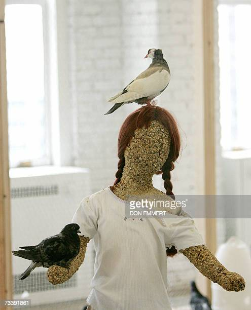 Pidgeons sit on a girl made of birdseed in a sculpture called 'Flying Rats' by Kader Attia 22 February 2007 during media preview at Christie's in New...