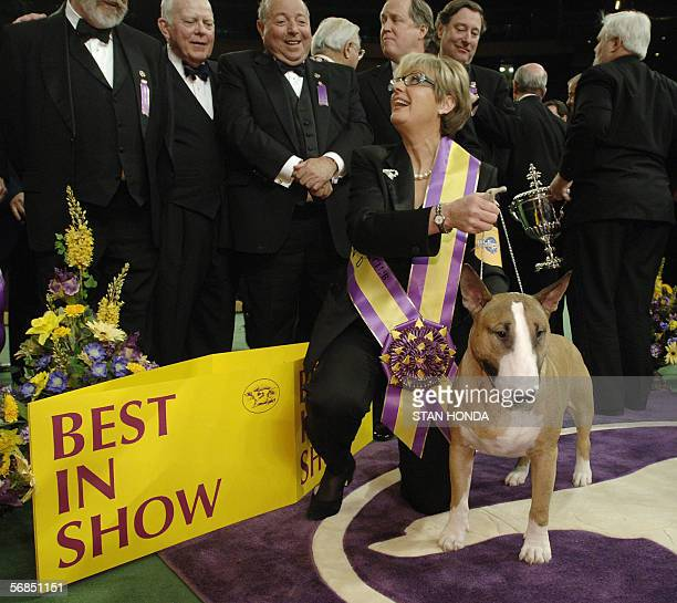Rufus a bull terrier with handler Kathy Kirk after he won Best In Show at the 130th Westminster Kennel Club dog show 14 February at Madison Square...