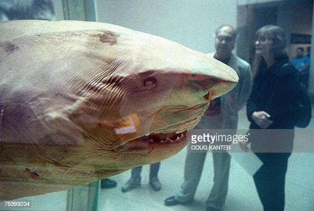TO GO WITH STORY EntertainmentUSBritain In this file 30 September 1999 photo visitors to the Brooklyn Museum of Art look at artist Damien Hirst's The...