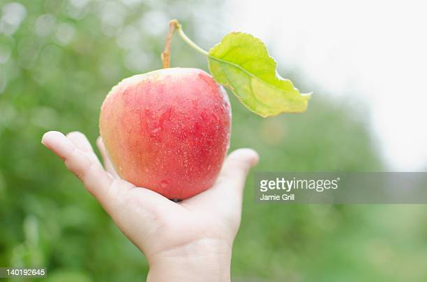 USA, New York, Warwick, Close up of girl's (8-9) hand holding red apple