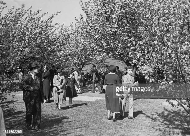 New Yorkers enjoy the sunshine walk among the cherry blossom trees of Brooklyn Botanic Garden, Mount Prospect Park, in the borough of Brooklyn, New...