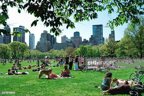 new yorkers in central park - new yorker building stock photos and pictures