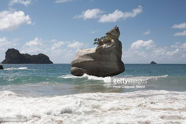 new zealand, coromandel, cathedral cove, rock formation in ocean - heidi coppock beard fotografías e imágenes de stock