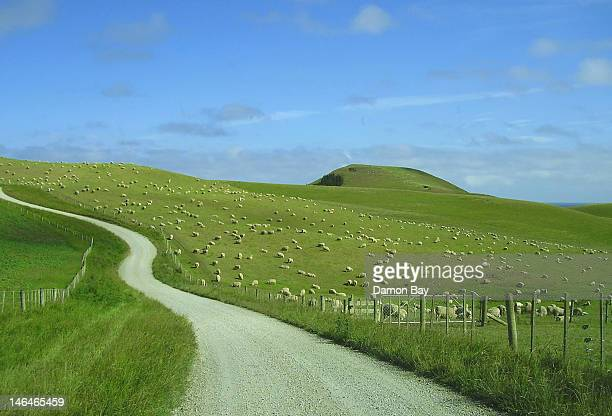 New Zealand farm road