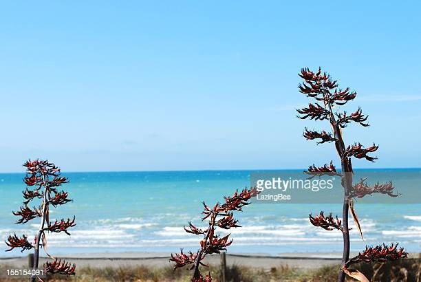 New Zealand Flax Flower and Sea