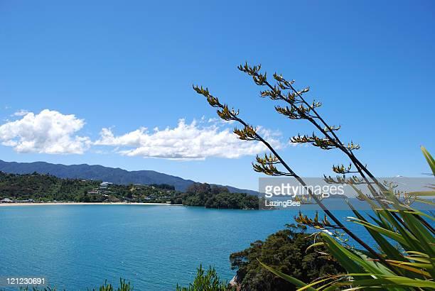 New Zealand Flax Flower with distant Kaiteriteri