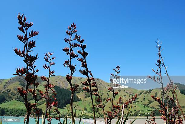 New Zealand Flax Flower with distant Land and Sea