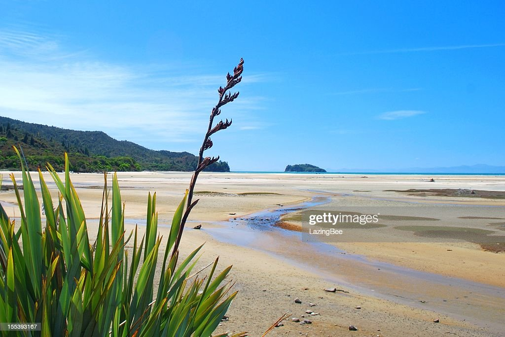 New Zealand Flax Flower with distant Seascape : Stock Photo