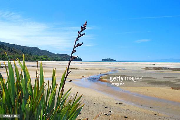 new zealand flax flower with distant seascape - seascape stock pictures, royalty-free photos & images