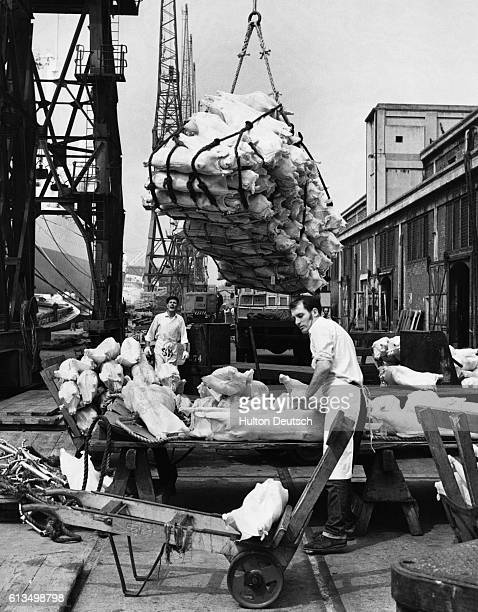 New Zealand lamb is unloaded from a cargo vessel at the Royal Victoria Docks