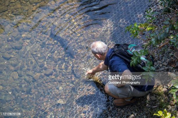 neuseeland: longfin aal - süßwasser stock-fotos und bilder