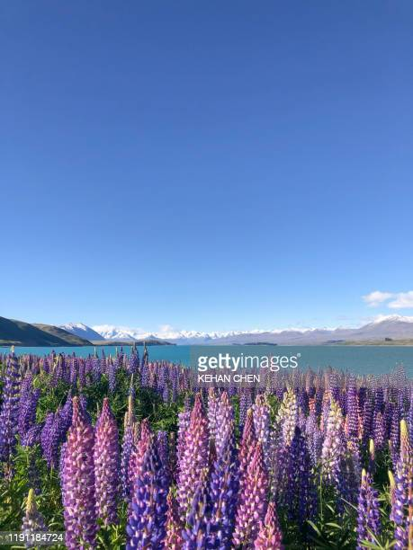 new zealand nature landscape southisland - palmerston north new zealand stock pictures, royalty-free photos & images