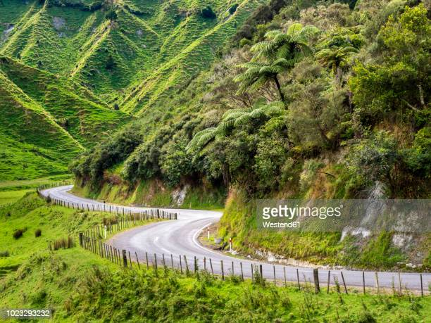 New Zealand, North Island, Manawatu-Wanganui Region, Forgotten World Highway
