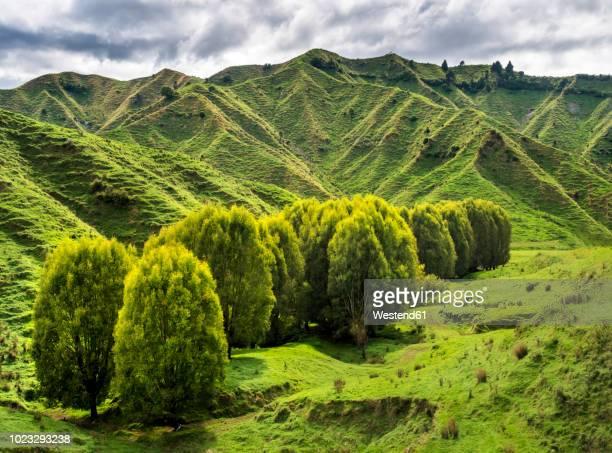 New Zealand, North Island, Manawatu-Wanganui Region, landscape