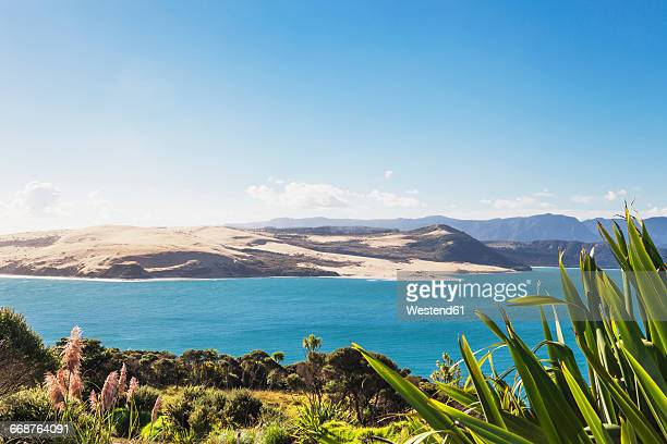 new zealand, north island, northland, hokianga harbour and north head giant sand dune, new zealand flax, phormium tenax - northland new zealand stock pictures, royalty-free photos & images