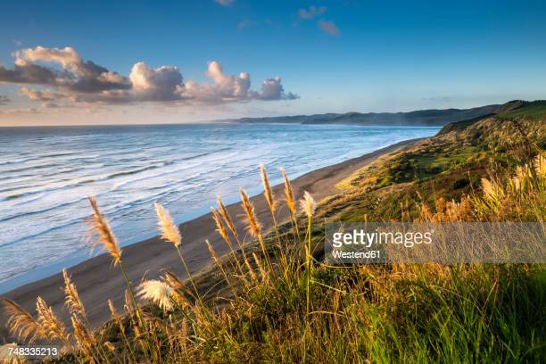 New Zealand, North Island, Raglan, Ngarunui Beach in the evening