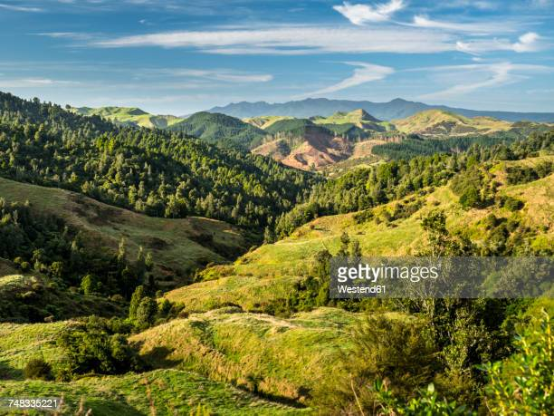 new zealand, north island, region waikato, scenics - lush stock pictures, royalty-free photos & images
