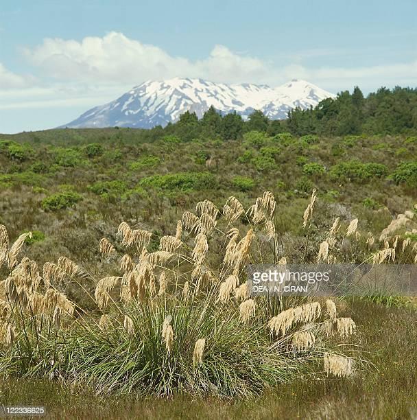 New Zealand North Island Tongariro National Park Mount Ruapehu