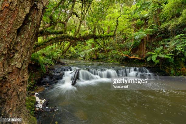 new zealand, otago, small rapid on purakaunui river - otago region stock pictures, royalty-free photos & images