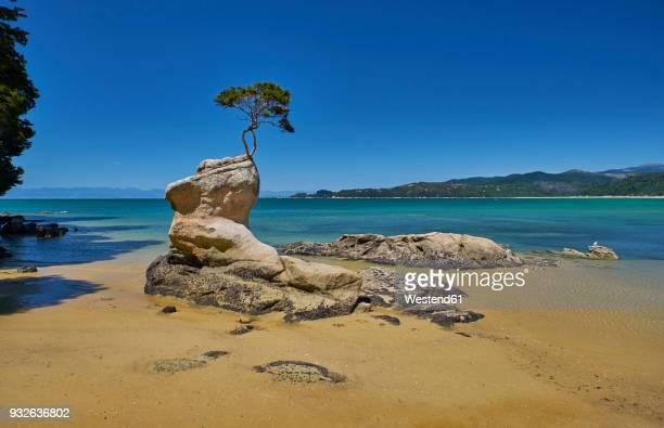 New Zealand, South Island, Abel Tasman National Park, tree on rock at the beach