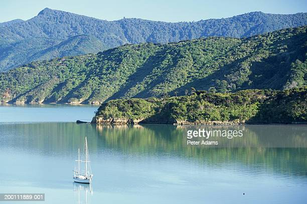new zealand, south island, boat in kenepuru sound - bras de mer caractéristiques côtières photos et images de collection