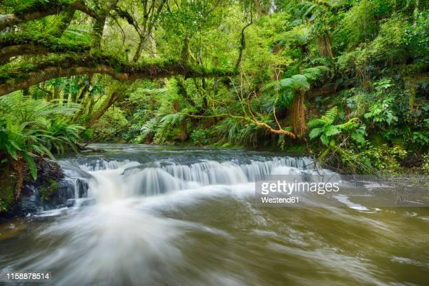 new zealand, south island, catlins, purakaunui falls - national park stock pictures, royalty-free photos & images