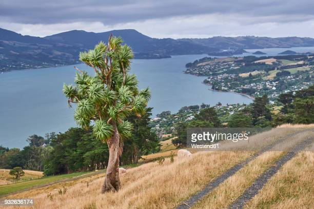 new zealand, south island, dunedin, otago peninsula - dunedin new zealand stock pictures, royalty-free photos & images