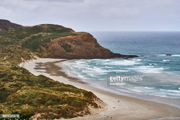 New Zealand, South Island, Dunedin, Otago Peninsula, Sandfly Bay