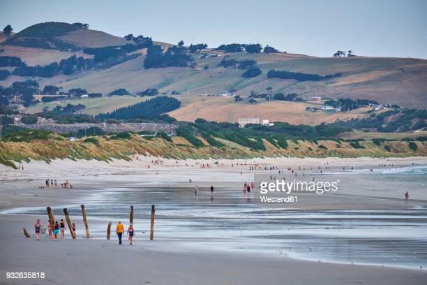 new zealand, south island, dunedin, st clair beach - dunedin new zealand stock pictures, royalty-free photos & images