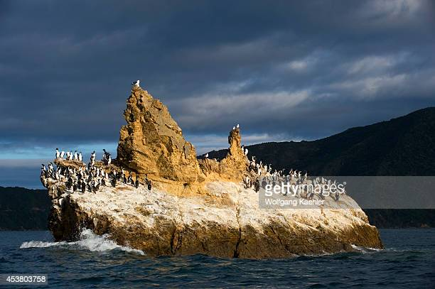 New Zealand South Island Marlborough Sounds Duffers Reef Shags On Rock