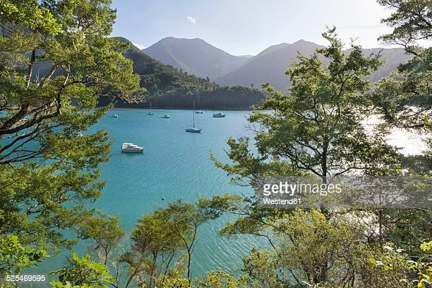 New Zealand, South Island, Marlborough Sounds, Tennyson Inlet, sounds of Duncan Bay